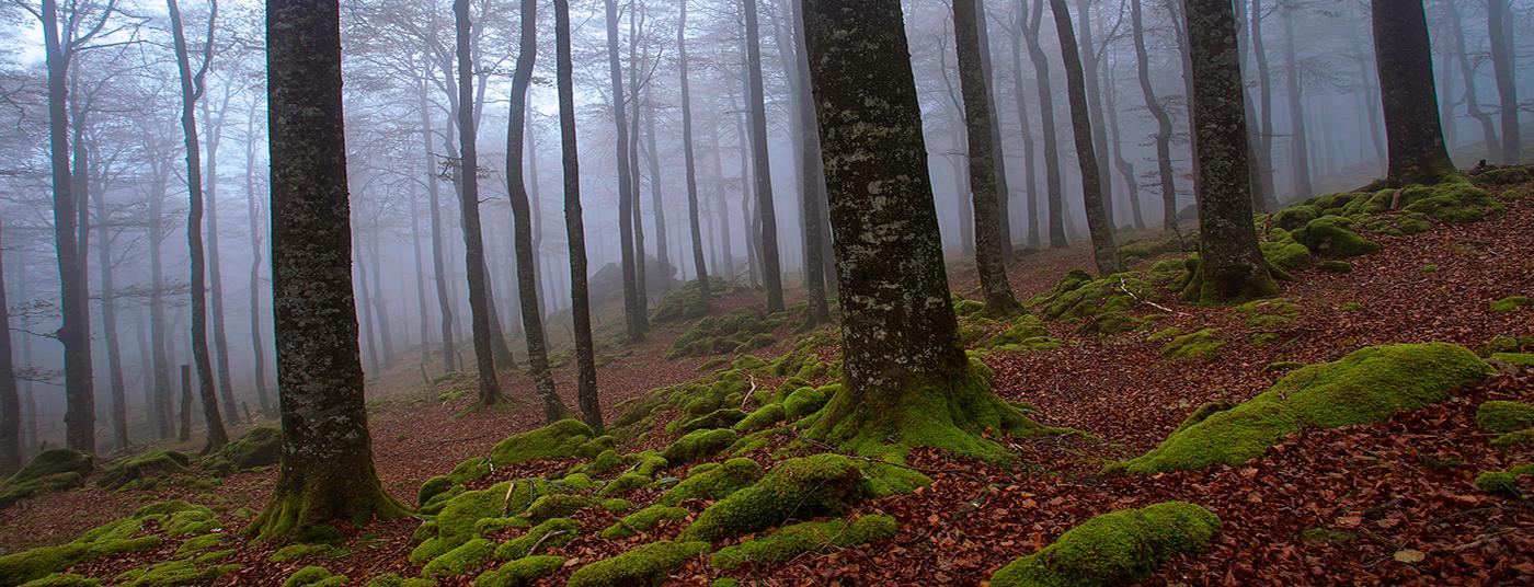<strong>La magia de la Selva de Irati te espera</strong>